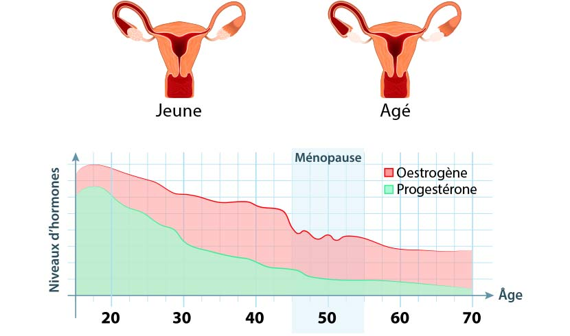 Niveau d'hormones pendant la ménopause